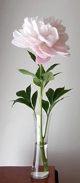 flower201405169.jpg