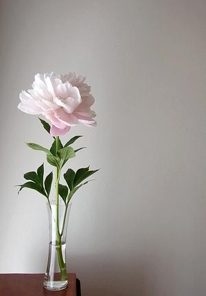 flower20140518peony1.jpg