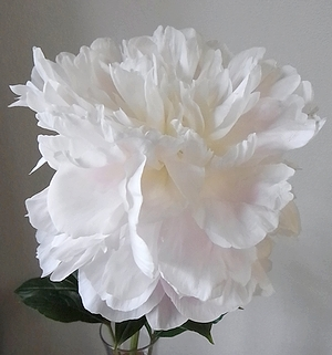 flower20140522peony2.jpg