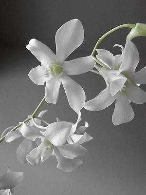 flower201408101.jpg