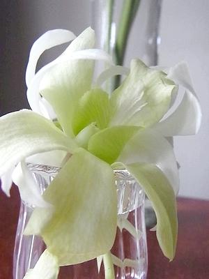 flower201408103.jpg