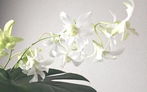 flower201408151.jpg