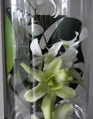 flower201408252.jpg