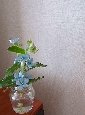 flower20141206.jpg