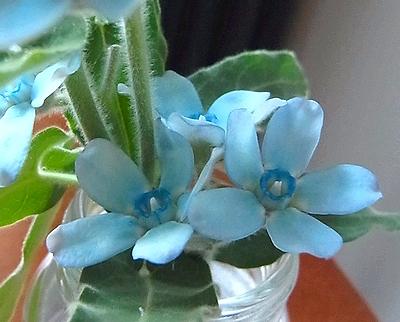 flower201412062.jpg