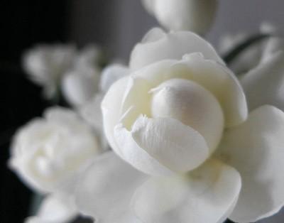 flower201505152.jpg