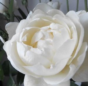 flower201505153.jpg