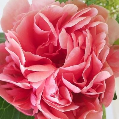 flower201505182.jpg