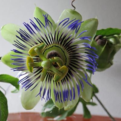 flower201506253.jpg