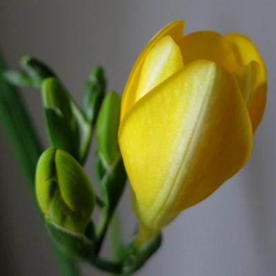 flower201602143.jpg