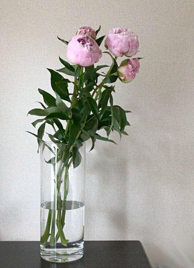 flower201706111.jpg
