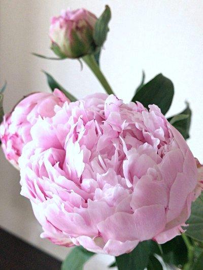 flower201706113.jpg
