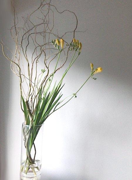 flower20180219freesia_1.jpg