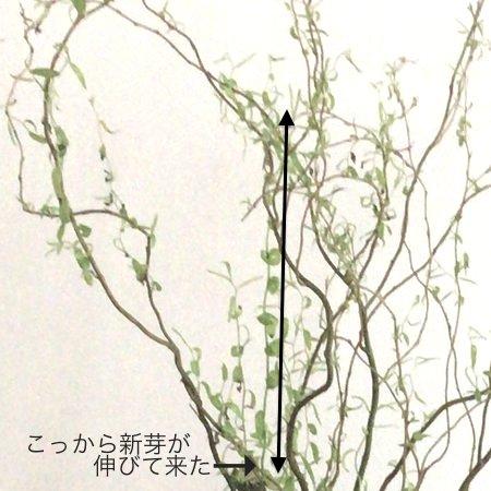 flower20180331_2.jpg