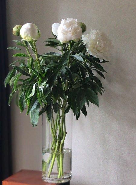 flower20180526_1.jpg