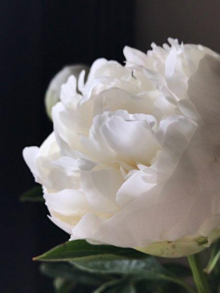 flower20180526_2.jpg